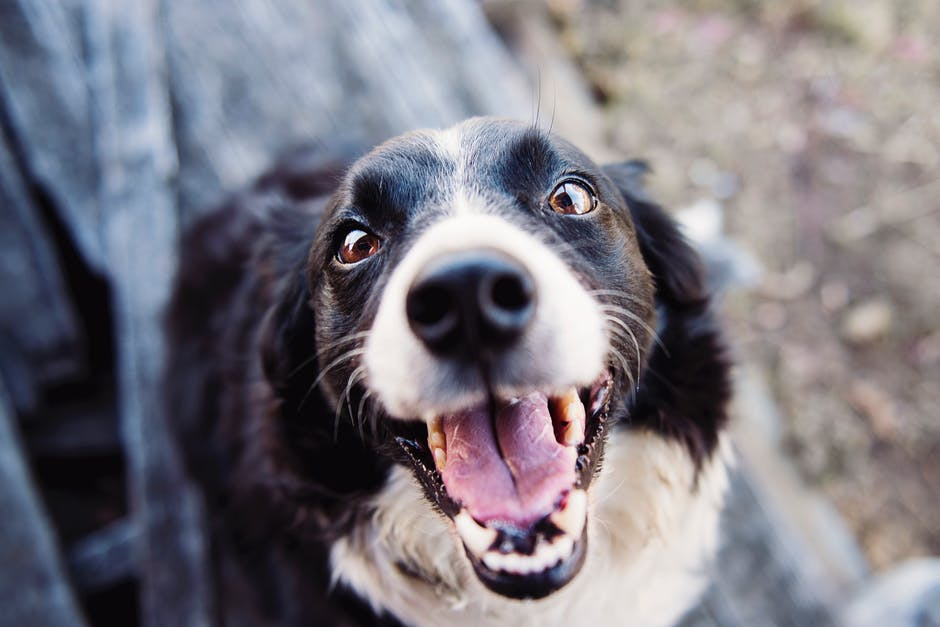 7 Health Benefits of Having a Dog