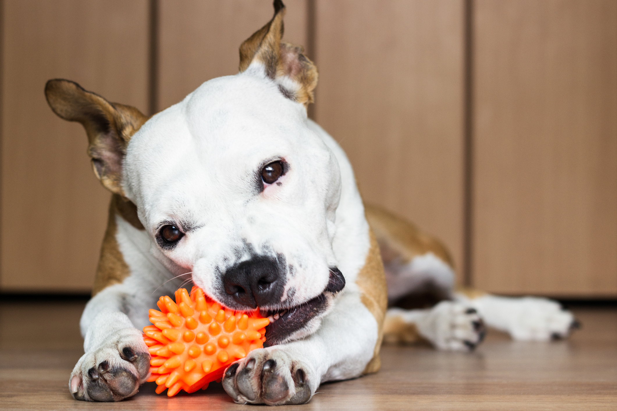 5 Overlooked Benefits of Dog Chew Toys