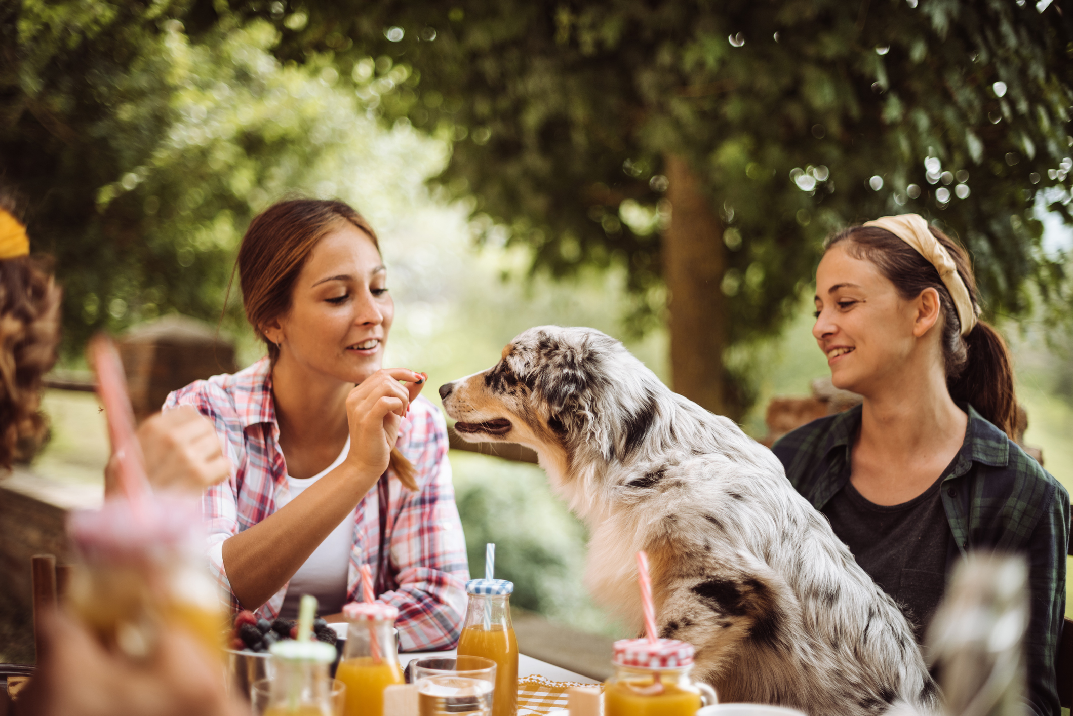 Top 10 Foods to Dehydrate for DIY Dog Treats