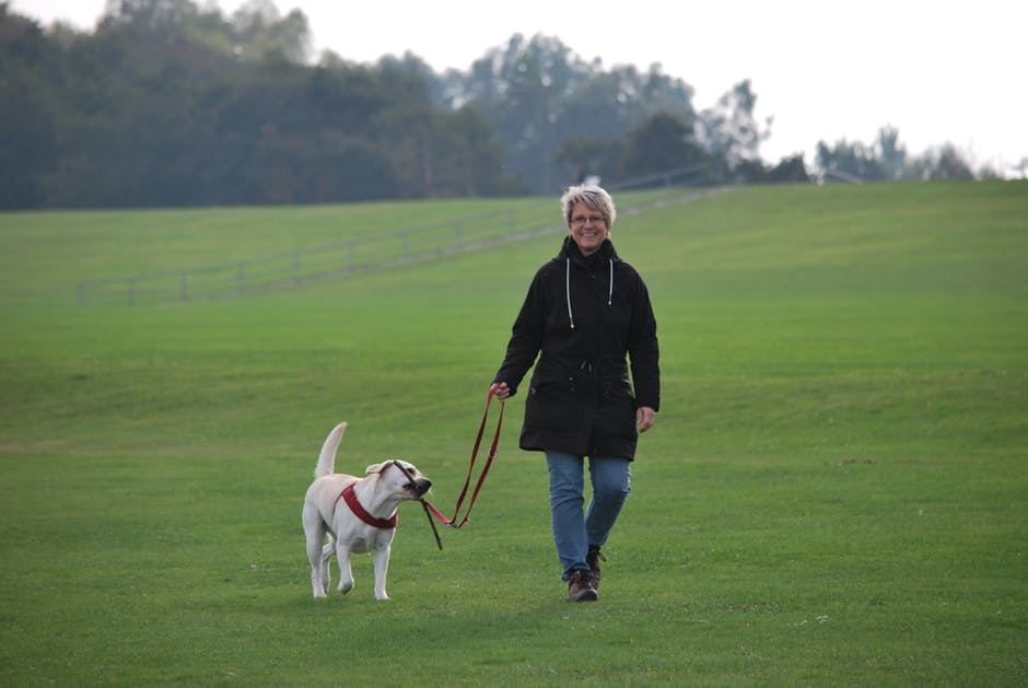 How Walking a Dog Helps Keep You Active
